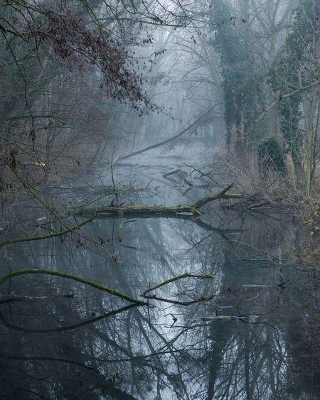 fog hunting Moody Slovakia Winter Mystic