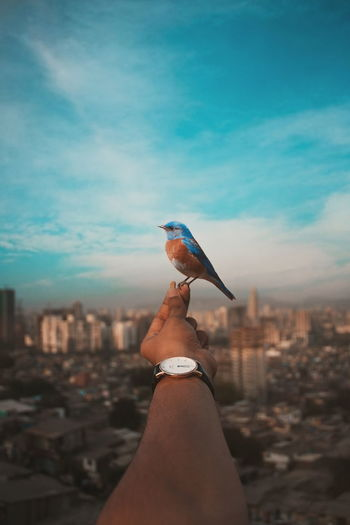 HEY BIRDY Cityscape City Human Body Part Sky Photography Urban Skyline Skyscraper Human Hand Sunset Watch Instagram EyeEm Best Shots WeekOnEyeEm Cloud - Sky Day The Great Outdoors - 2017 EyeEm Awards The Street Photographer - 2017 EyeEm Awards EyeEmNewHere Nature Outdoors Followme India Mumbai