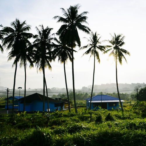 A scenery while I going home Kampung Morning Outdoors Palm Tree Relaxing Moments Scenery Showcase March Summer Sunnyday Tranquil Scene Tropical Climate Vacation