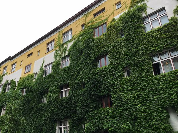 House Green House Green Wall Hauswand Window Windows Plants Architecture