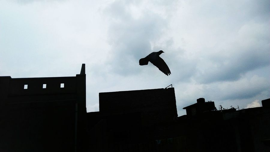 Pigeon Flying Away Flying High Freedom Still Low Angle View Built Structure Flying City Building Exterior Silhouette Outdoors Sky Day Bird No People Architecture Blackandwhite Buildings Urbanphotography