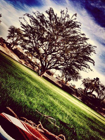 Xmasinthedesert Enjoying Life Desert Palmdesert