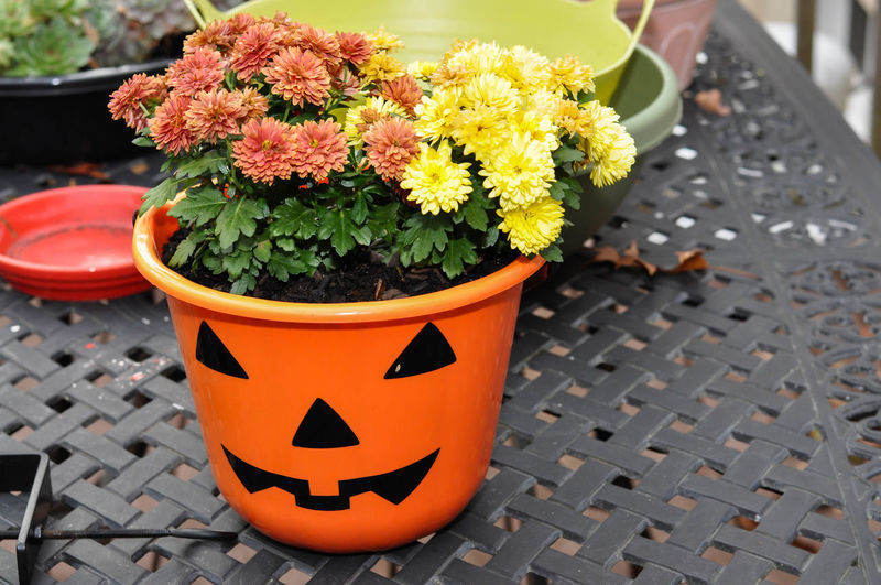 Pumpkin Themed Flower Pot on a Metal Table Autumn Decor Halloween Beauty In Nature Decoration Fall Flower Flower Head Growth Jack O Lantern Nature Orange Color Outdoors Plant Potted Plant Pumpkin Table