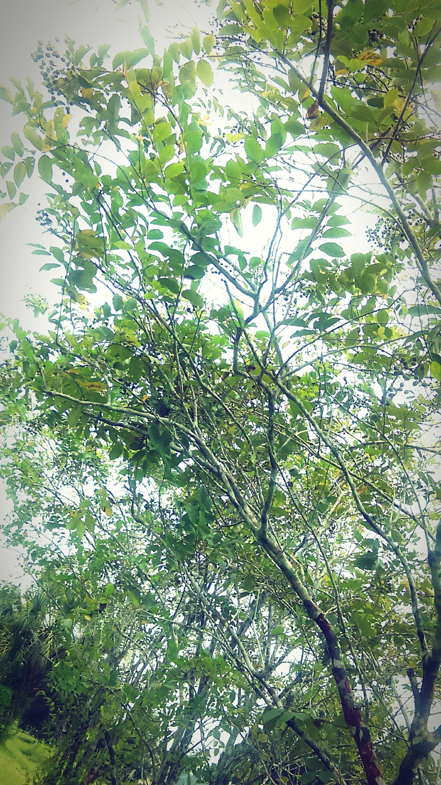 tree, low angle view, branch, growth, green color, leaf, nature, beauty in nature, tranquility, day, no people, lush foliage, outdoors, green, plant, sky, close-up, growing, sunlight, freshness