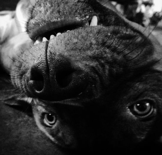 You Name It One Animal Animal Themes Domestic Animals Mammal Dog Pets Close-up Animal Head  No People Animal Nose Indoors  Portrait Day