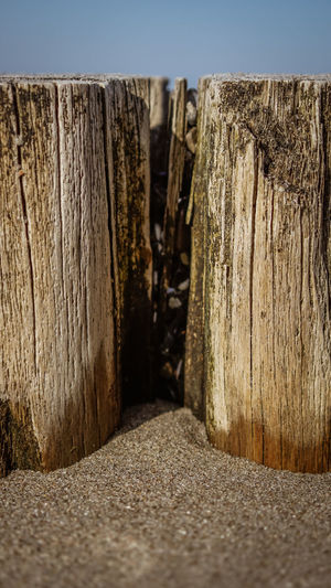 Tree at the Beach Baltic Sea Tree Bark Clear Sky Close-up Day Direction Focus On Foreground In A Row Long Nature No People Outdoors Pattern Post Rough Selective Focus Still Life Textured  The Way Forward Tree Wall - Building Feature Wood Wood - Material Wooden Post