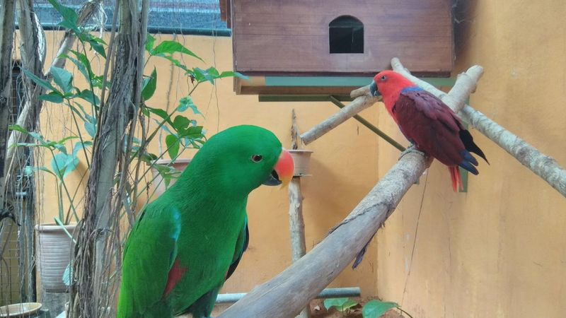 """""""should we fly away?""""... """"not yet, wefie first."""" Love Birds Green Red Parrot Domestic Bird Bird Perching Parrot Water Spraying Cage Green Color Birdcage Captive Animals Animals In Captivity Zoo"""
