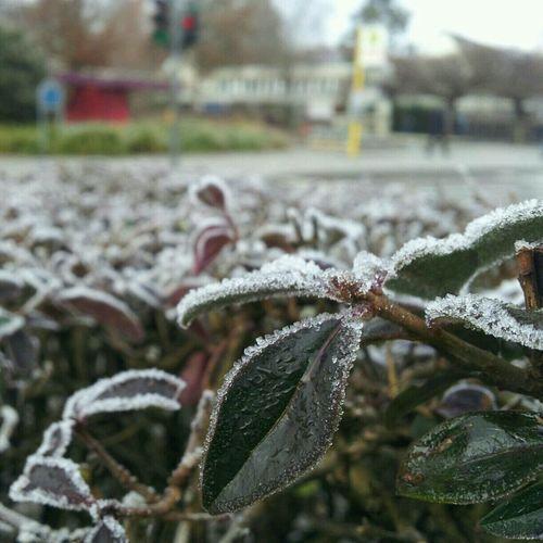 In front of my school.