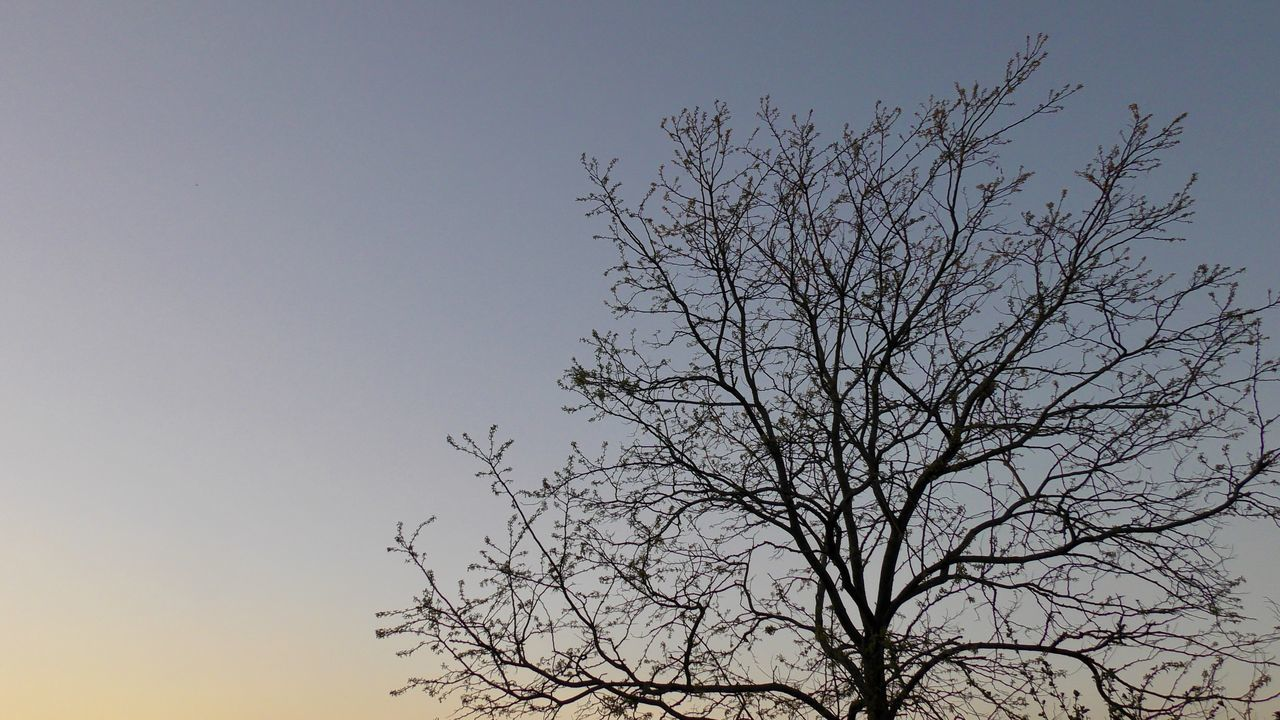 LOW ANGLE VIEW OF SILHOUETTE BARE TREE AGAINST CLEAR SKY AT SUNSET
