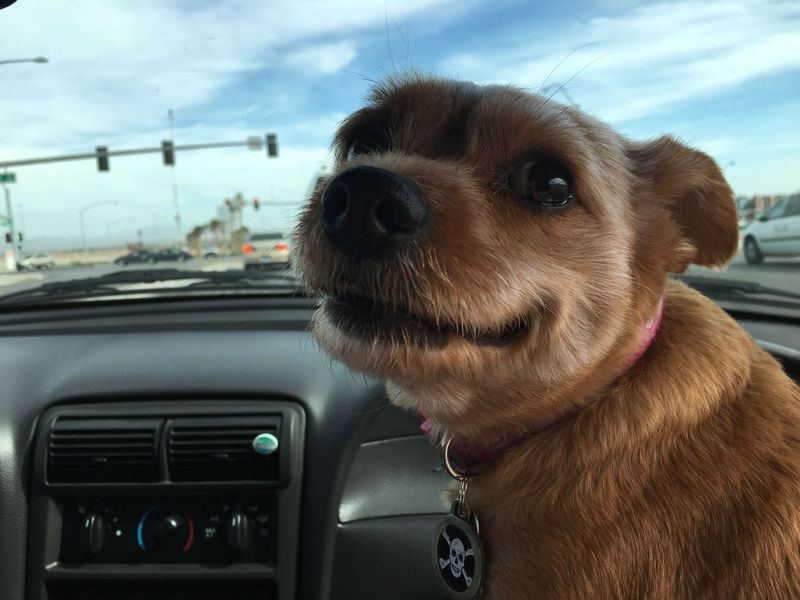 Showcase March Dog Happy Cute Hanging Out Smiles For Spring Hello World Enjoying Life Dog Love Untouched Stock Unedited Photo Stockphotography Car Ride  Happy Dog Dog In Car Daytime