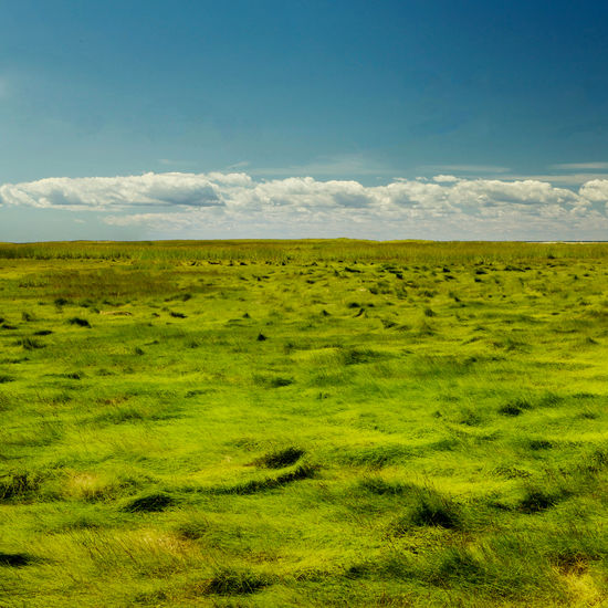 Scenic view of landscape against sky