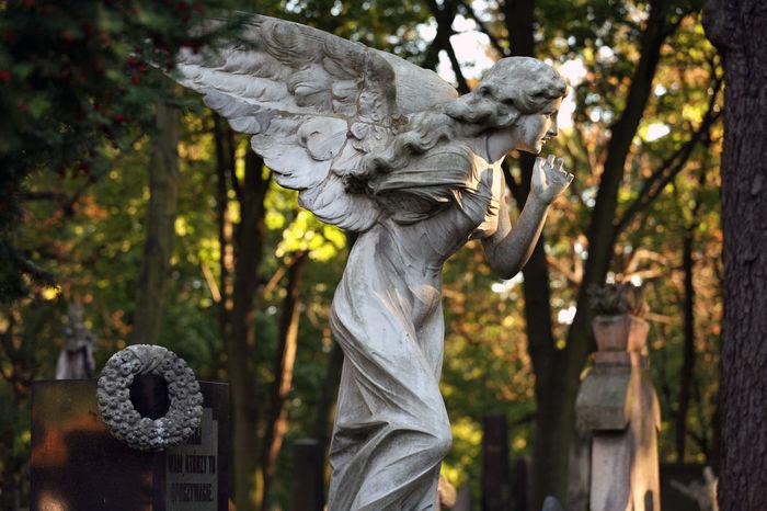 Powazkowki Cemetery, Warsaw, Poland Angel Autumn Cemetery Cmentarz Powązki Powązki Powązkowski Religion Sculpture Statue Tombstone Varsowia Warsaw Warszawa  Wings
