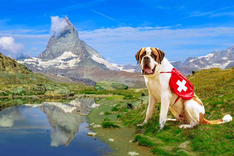 Dog standing in a lake against mountain range