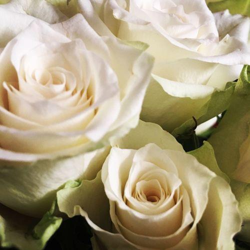 Roses Summer Present Pressies Thankyou