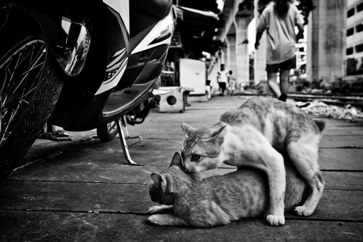 Cat sleeping on street