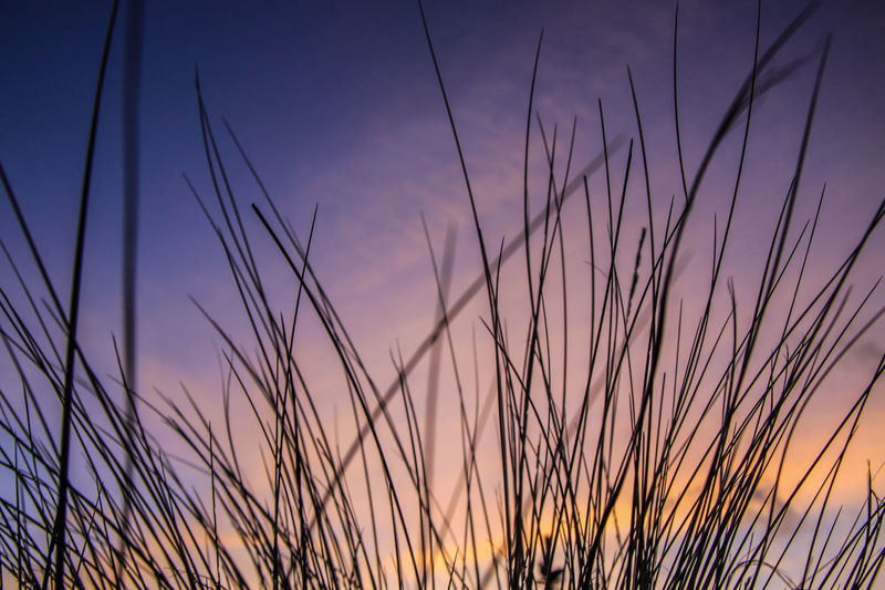 Beach Grass Denmark Backgrounds Beauty In Nature Dune Dusk Grass Growth Landscape Nature No People Outdoors Plant Rural Scene Scenics Silhouette Sky Summer Sunset Tranquil Scene Tranquility