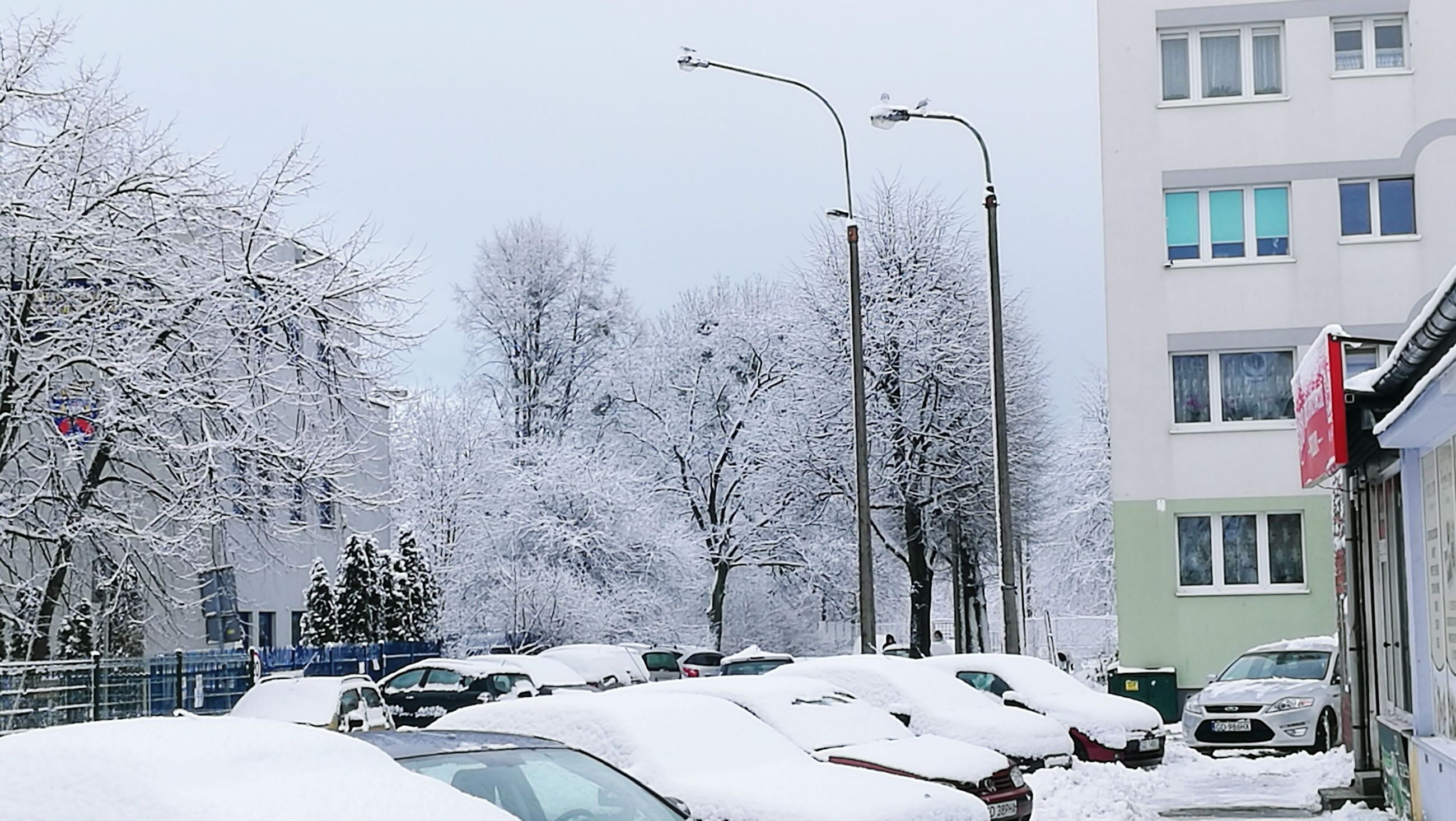 snow, winter, cold temperature, weather, tree, building exterior, city, no people, sky, outdoors, day, snowing, architecture