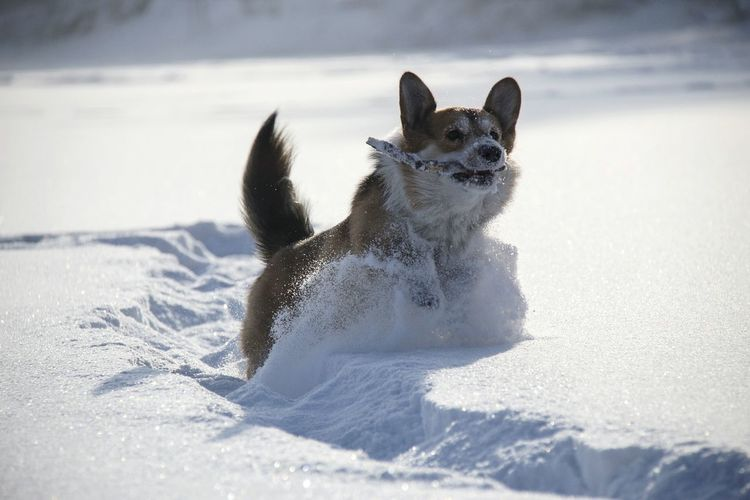 Dog in snow against sky