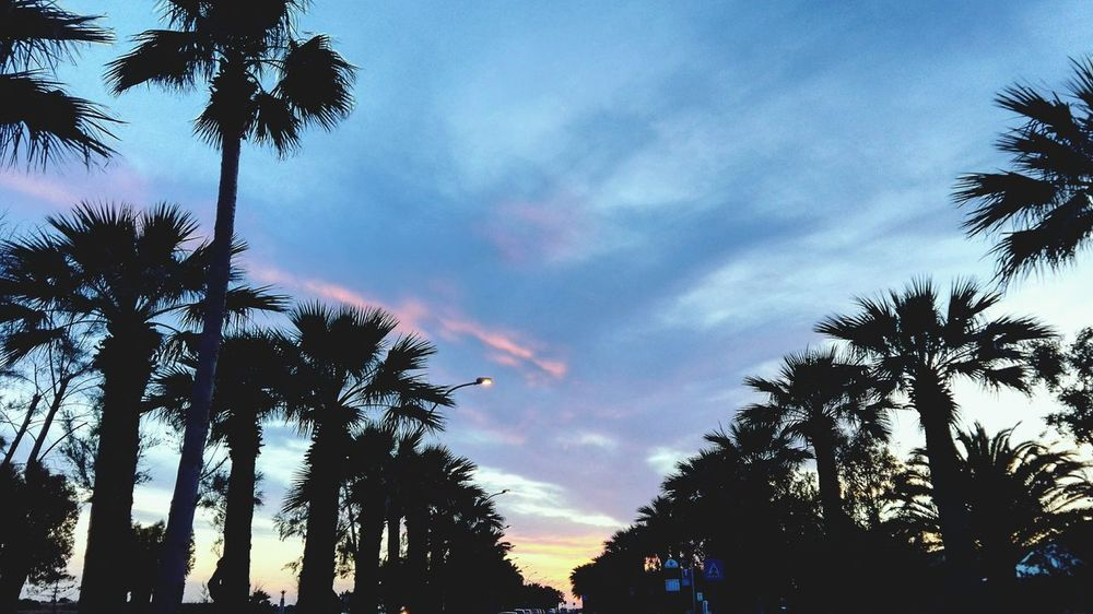 Like Miami The Great Outdoors - 2016 EyeEm Awards Taking Photos Landscape_Collection Sky And Clouds Peace And Quiet Summertime Coachella2016 F4f#follow#follower#followme#followall#followback#follow4follow#followforfollow#ifollow#instagood#insagramer#girl#me#home#uor#alwaysfollow#like#likeme#like4like#tbt#happy#nature#fun#smile#alwaysfollow#yum#yumme#instalove#nastya#likeit#likeit#love#instalov Vacation