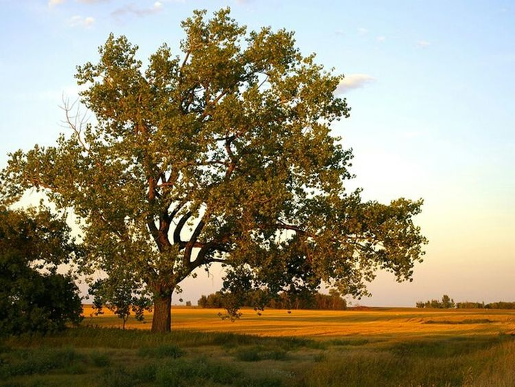 35mm Photography Landscape Prarie Tree Late Afternoon Light