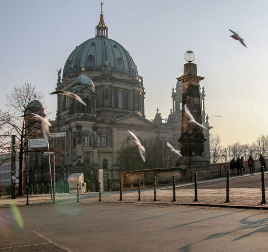Birds flying over street against berlin cathedral in city