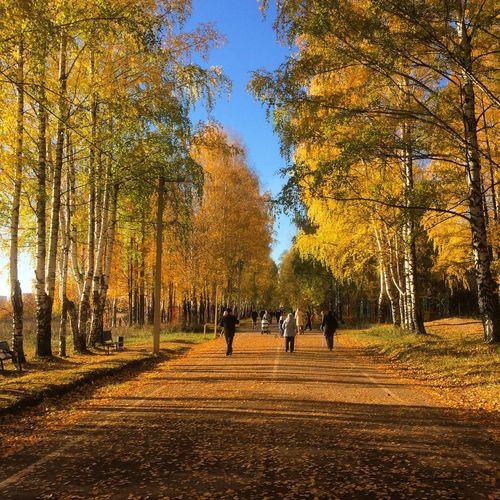 People on autumn trees against sky