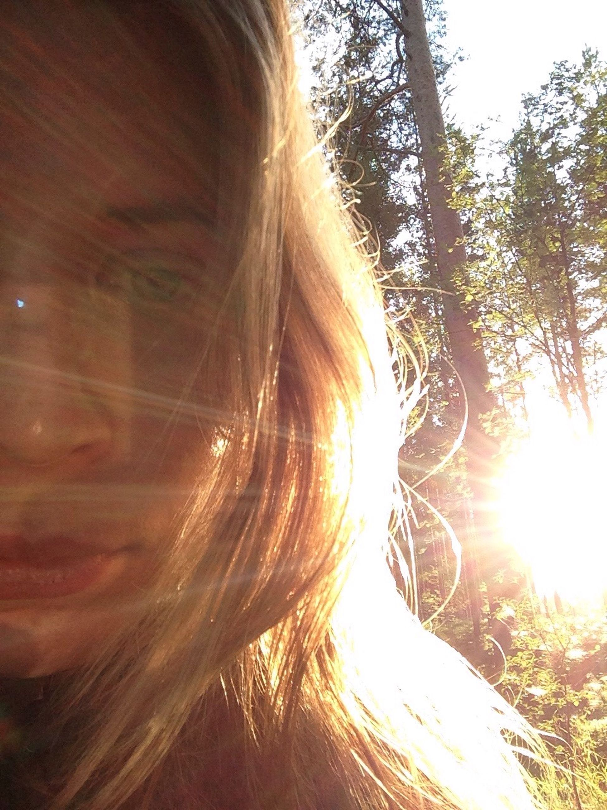 long hair, sunlight, lifestyles, sun, young women, leisure activity, sunbeam, headshot, young adult, lens flare, tree, person, close-up, human hair, sunset, outdoors, nature