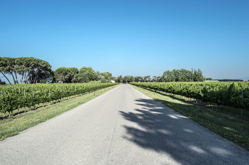 Road through vineyard