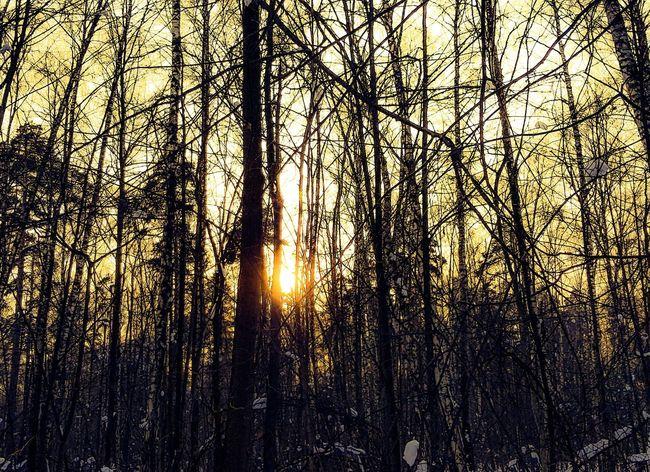 Люблю солнце зимой Лес В лесу на прогулку красота Sky Sun Msk Msk ♥ небо Beautiful деревья веткидеревьев