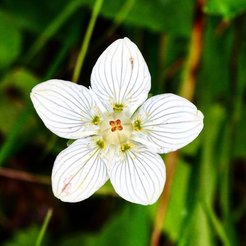 Flower Flower Flowering Plant Plant Close-up Fragility Vulnerability  Flower Head Focus On Foreground Pollen Beauty In Nature White Color Nature Day Outdoors Freshness