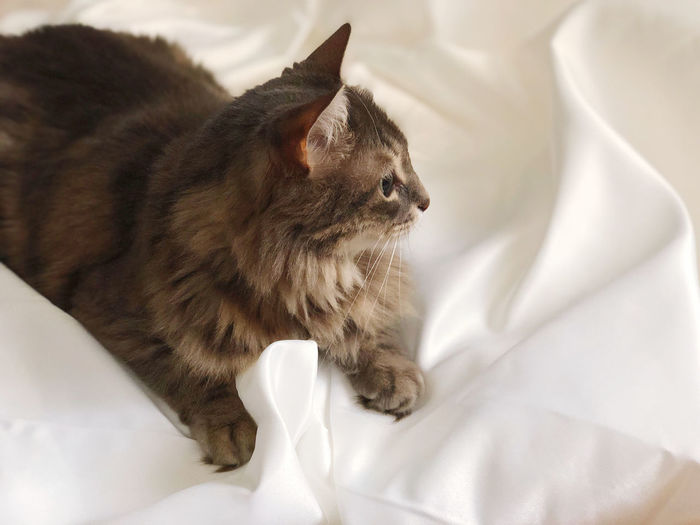 High angle view of cat lying on bed