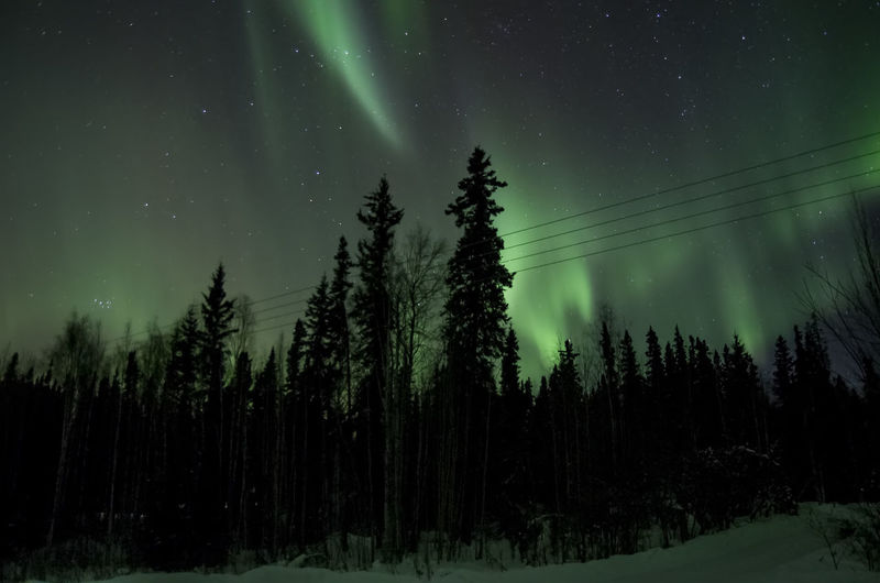 Panoramic View Of Trees In Forest Against Sky At Night