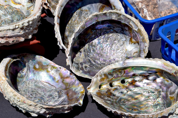 Pretty Shells Aluminum Close-up Day Irridescent Shells Large Group Of Objects Multi Coloured Shells No People Outdoors