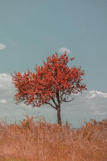 Autumn tree on field against sky
