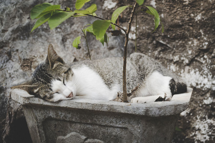 Young cat, not a kitten anymore, sleeping in a planter illustrating peace, rest, relaxation