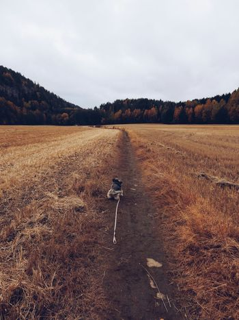 Dog Dogslife Dogoftheday Autumn Fall Fall Beauty Colors Of Autumn Fall_collection Autumn Collection Field Dogs Dog Lover Pet Love Mammal Dog Love Pets Pet Dog❤ Dogwalk Dogwalking Dogs Of EyeEm Dog Life Landscapes With WhiteWall