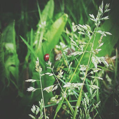 Abugslife Lieveheersbeestje Nature On Your Doorstep Nature Ladybug