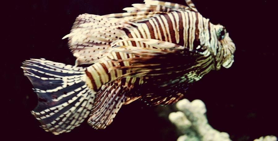 Water Underwater Swimming Nature Beauty In Nature No People Zoo Kalinigrad Fish