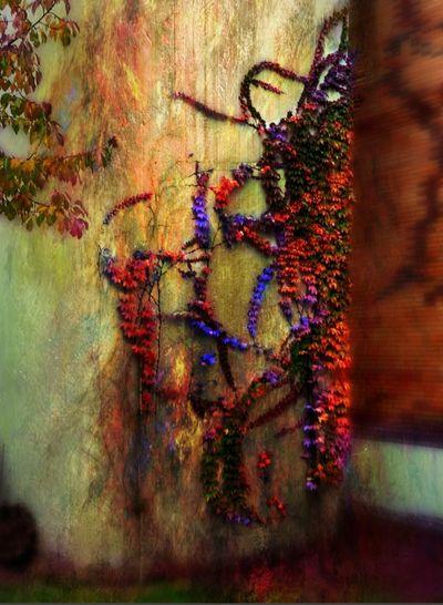 natures beauty is everywhere Artwatchers Wallart Streetphotography Walls Leaves Artofvisuals Streetview Scenics EyeEm Best Shots - Nature EyeEm Best Shots EyeEmNewHere EyeEm Nature Lover EyeEm Gallery EyeEm Selects EyeEmBestPics Seethroughmyeyes Natgeo Plants See Through My Eyes Followme Multi Colored Full Frame Close-up Outdoors Day No People Tree