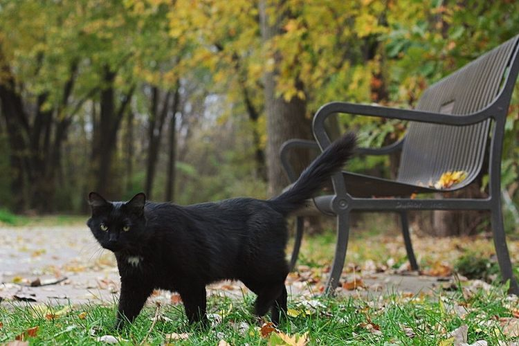 Black cat on grass against trees