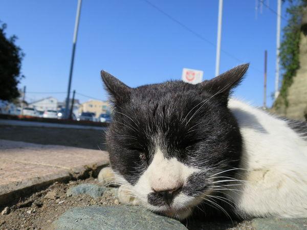 Stray Cat Cat Gato Zzz Relaxing Blue Sky EyeEm Best Shots at Enoshima 江の島 in Japan