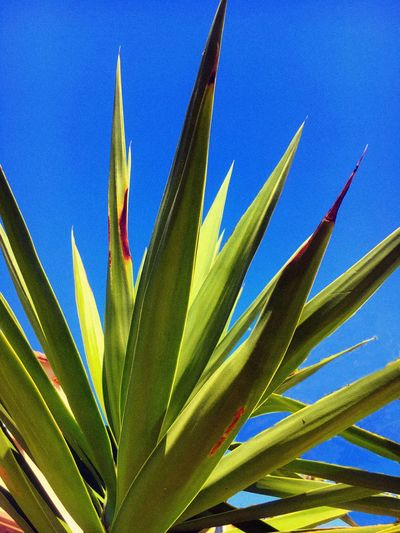 Plant Blue