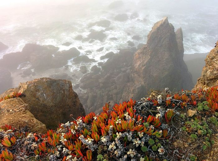 High Angle View Of Plants Growing On Mountains By Bodega Bay During Foggy Weather