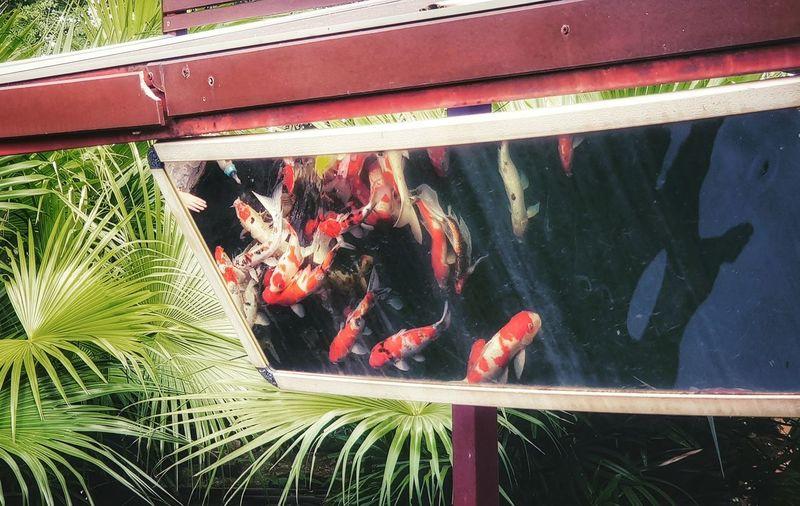 Water Sea Life Fish Close-up