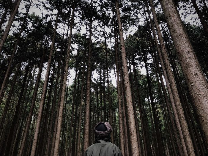 Rear view of man amidst trees in forest against sky