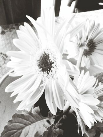Capa Filter Flowers