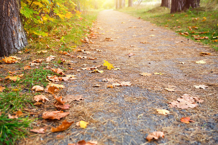 Surface level of dry leaves on footpath