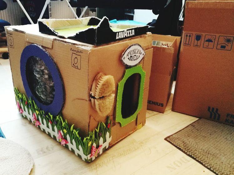 the renovation starts today Cat Lovers Cat House DIY PetHouse Cat♡ Pet Seniorpets Hot Glue Gun Basteln Close-up