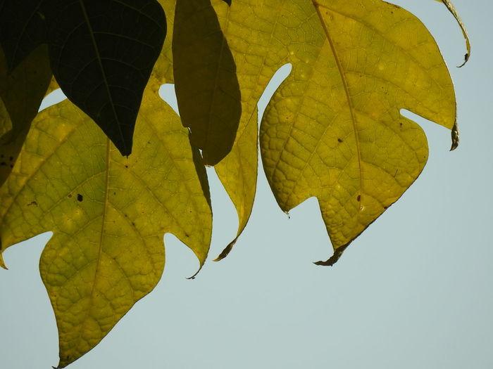 Leaf Flying
