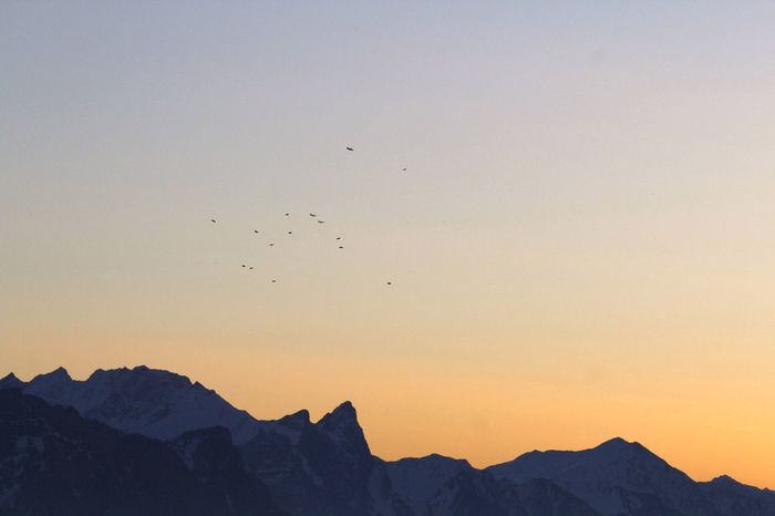 Sunrise Sunset Bird Mountain Flying Animals In The Wild Beauty In Nature Nature Flock Of Birds Scenics Animal Themes Silhouette Animal Wildlife Large Group Of Animals Outdoors Mountain Range Sky Tranquility No People Tranquil Scene Clear Sky Shades Of Winter An Eye For Travel